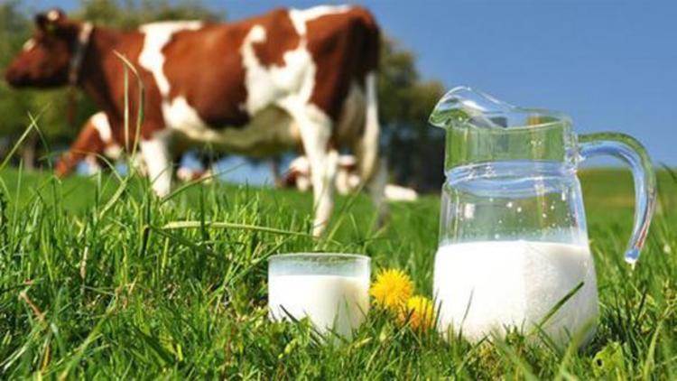 Süt prim desteği 25 kuruşa çıkacak